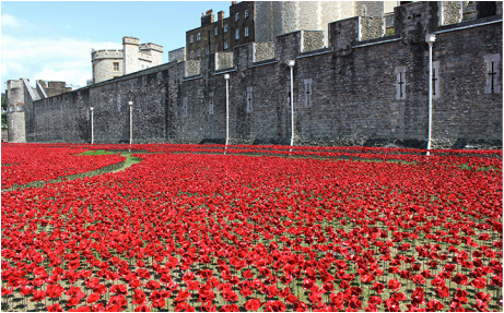 Englands poppies gr4peaceandgovernmentweebly picture mightylinksfo